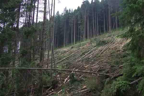 вырубка-леса.jpg