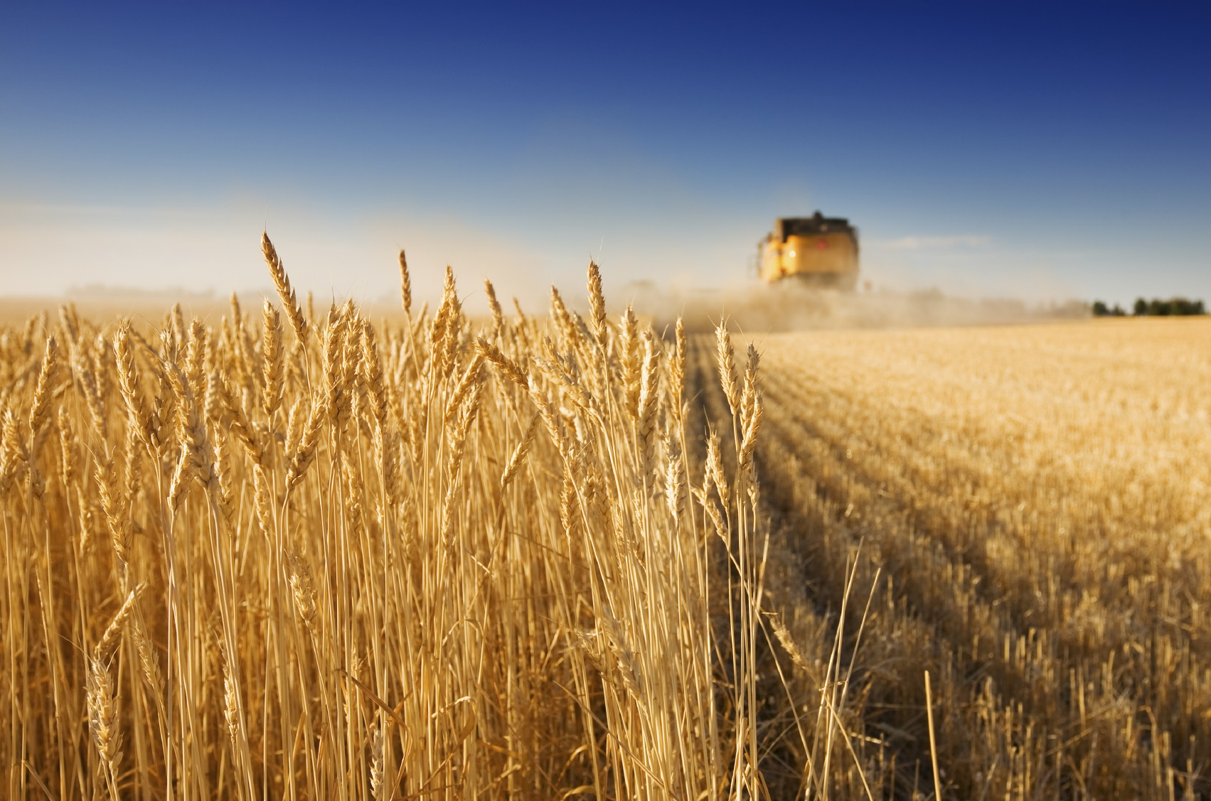 зерно_урожай.jpg