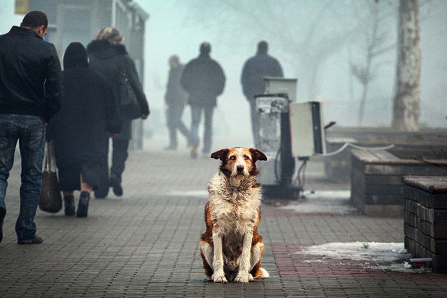 бездомные_животные.jpeg