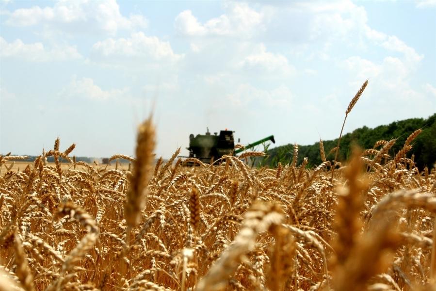 Российская Федерация по результатам сельхозгода экспортировала 35,5 млн тонн зерна