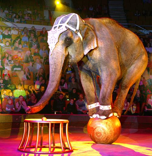 цирк 2