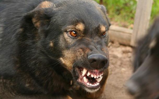 собака 2.
