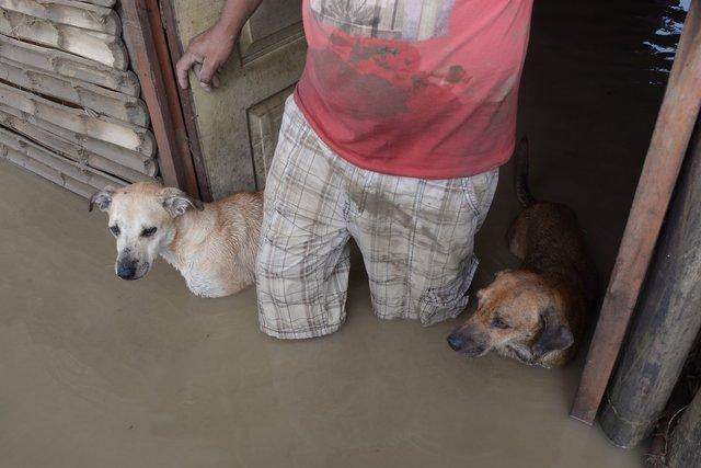 наводнение животные