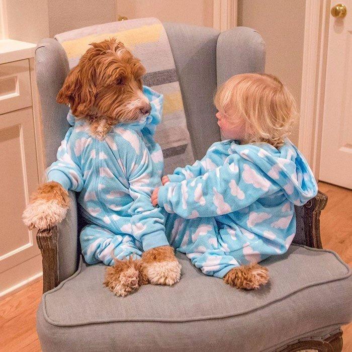 дружба мальчика и собаки