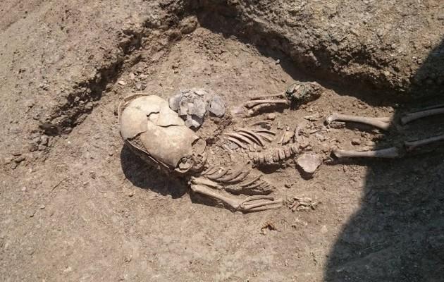 скелет 1.