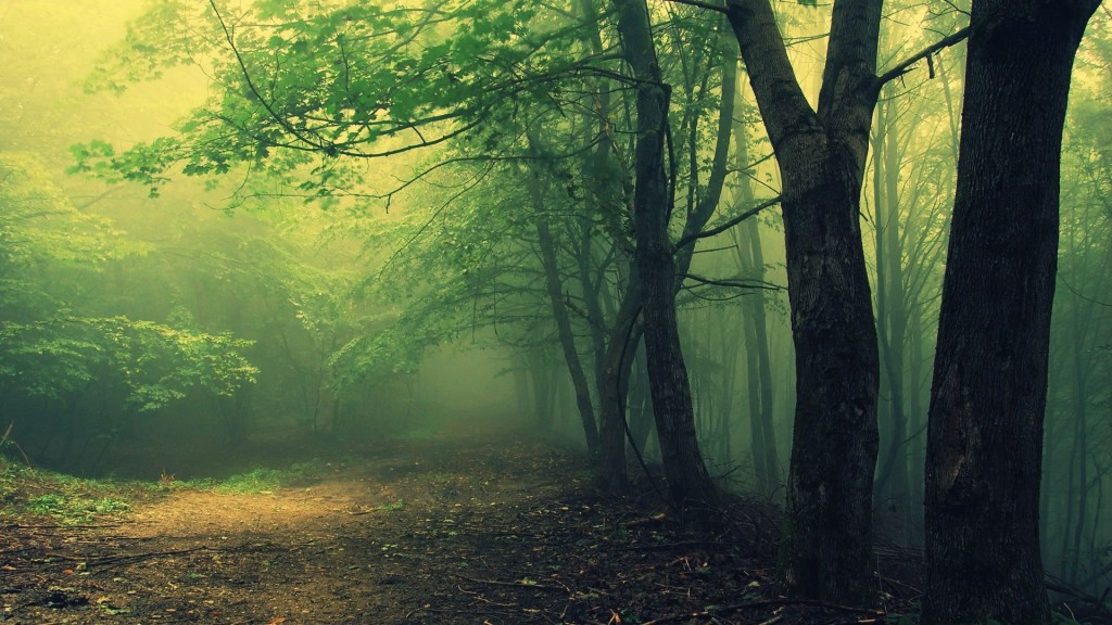 Лес Хойя, Румыния.