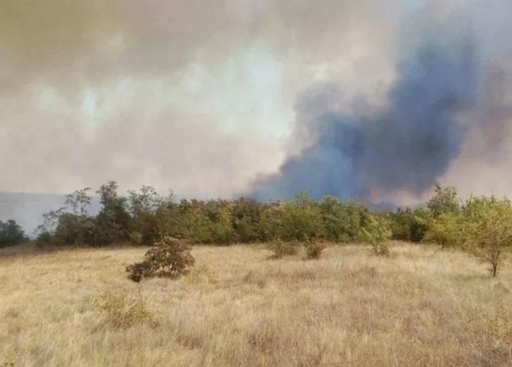 ВНиколаевской области вспыхнул масштабный пожар влесном урочище