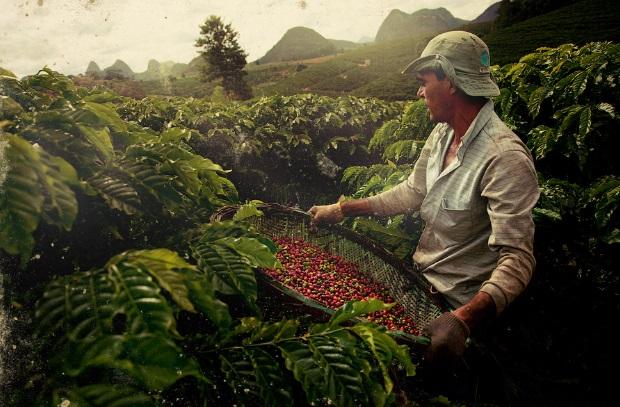 В мире может возникнуть глобальный дефицит кофе, – эксперты