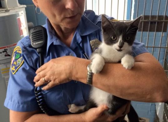 Киеврада предлагает парламенту сделать зоополицию для защиты животных