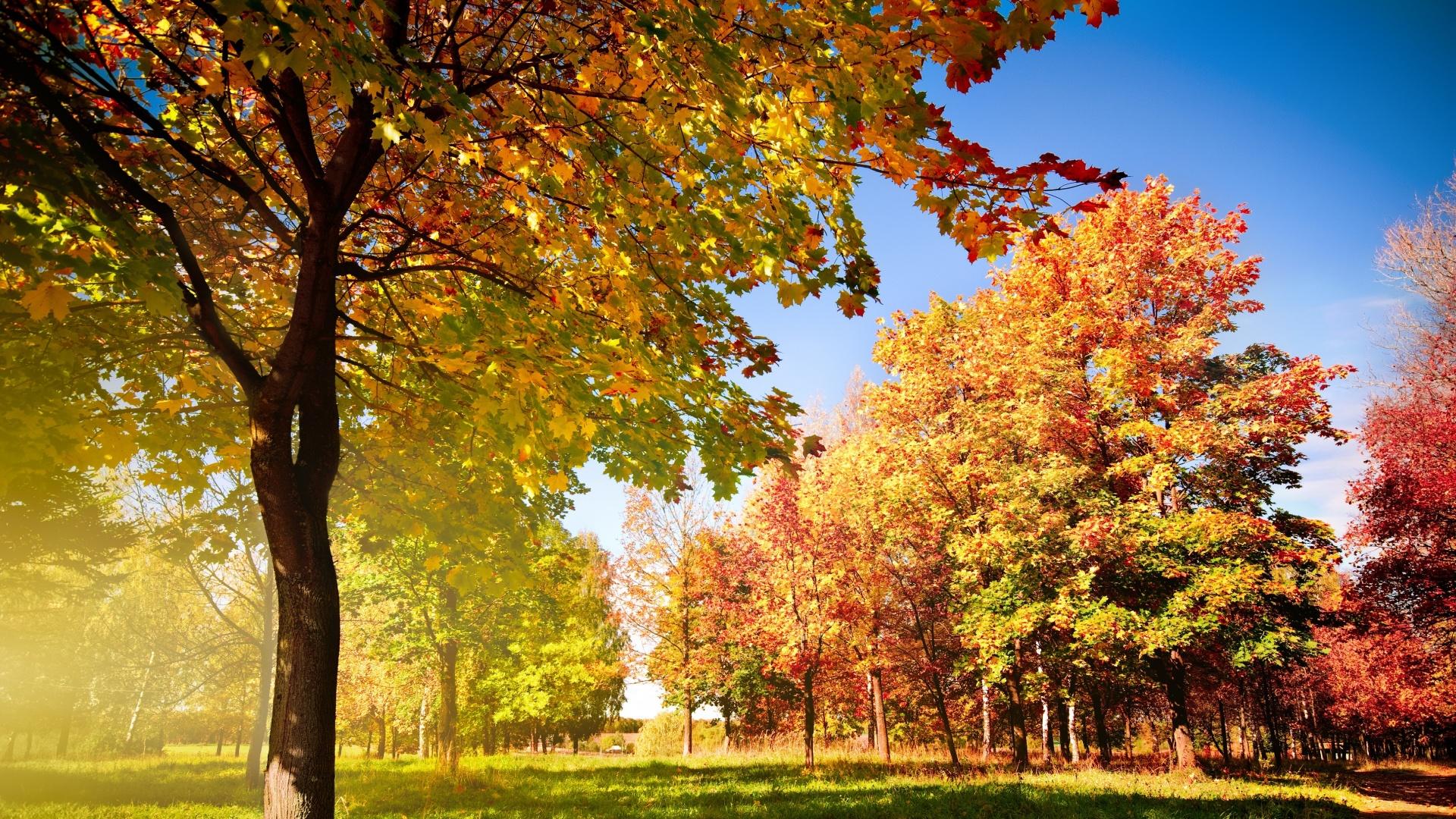 Фото осени осень в лесу
