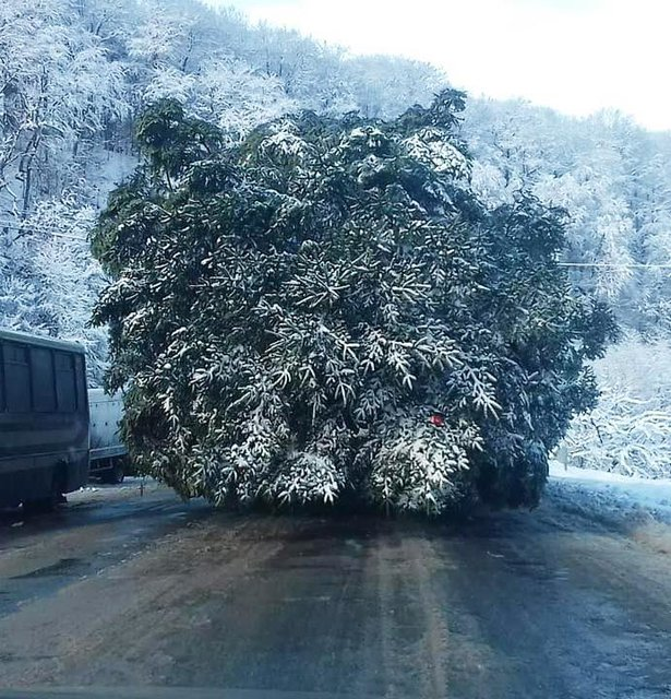 Новогодняя елка Киев