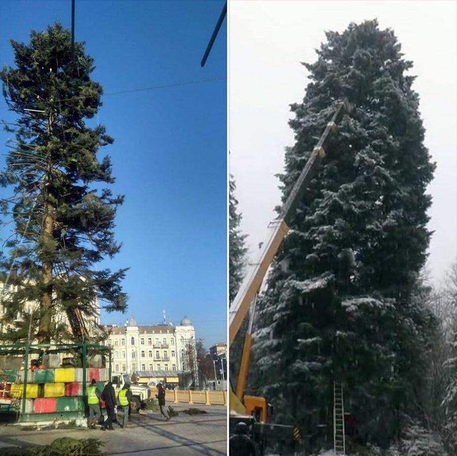 елка киев