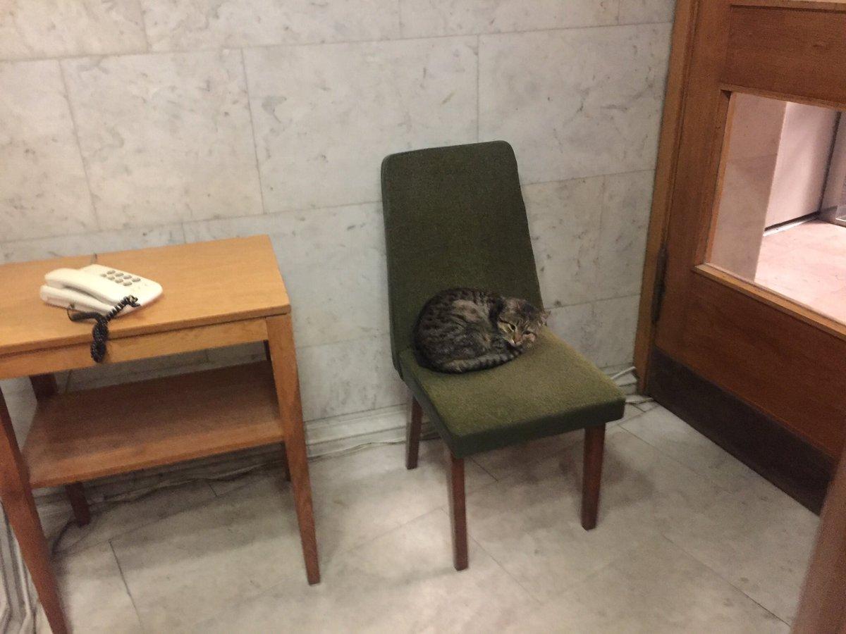 кот посол