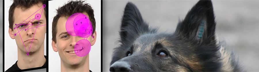 реакция собаки на улыбку