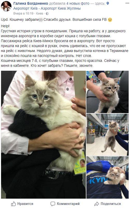 Кошка-Киев