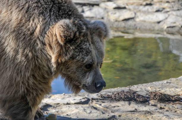 Львов медведи