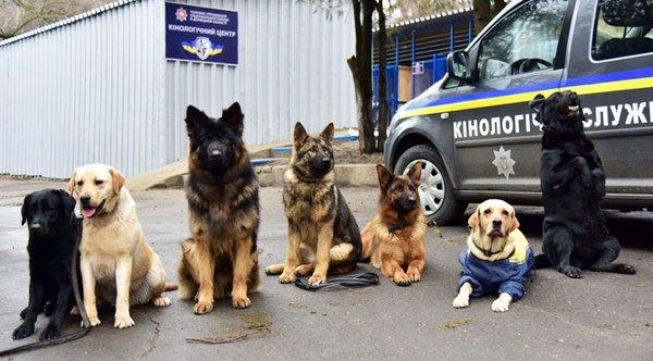 собаки кинологический центр Мариуполь