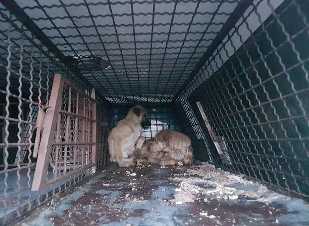 зоозащитники в бердянске