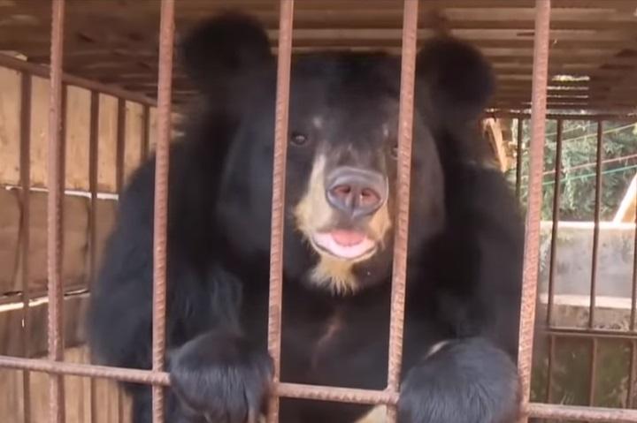 медведь в Китае