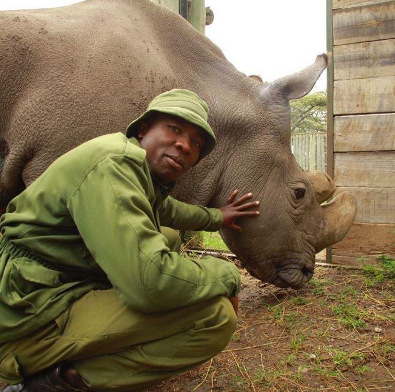носорог Судан