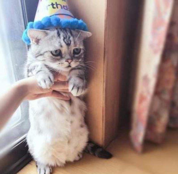 самая печальная кошка