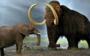 слон и мамонт