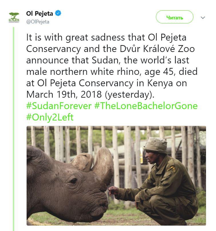 смерть носорога