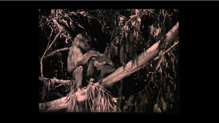 фильм обезьяна