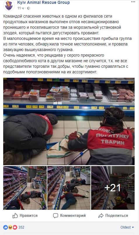 кот в супермаркете