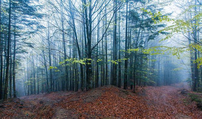 Рада взялась зарешение проблемы массовой вырубки леса вКарпатах