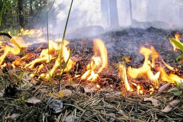 листья горят