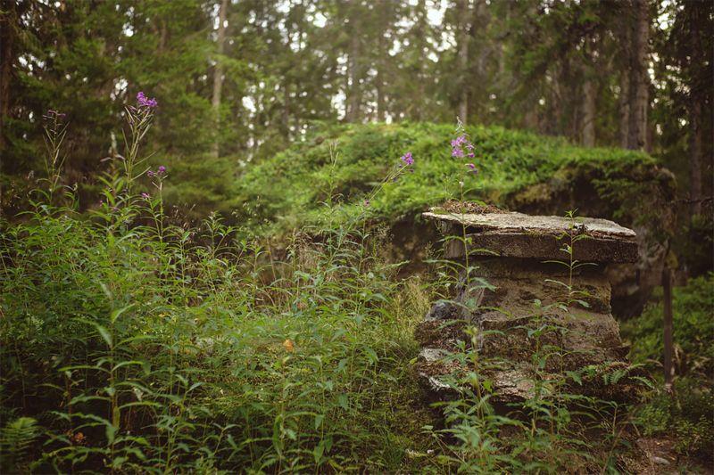 землянка в Швеции