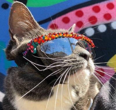 Бейгл кошка