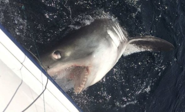 словил акулу
