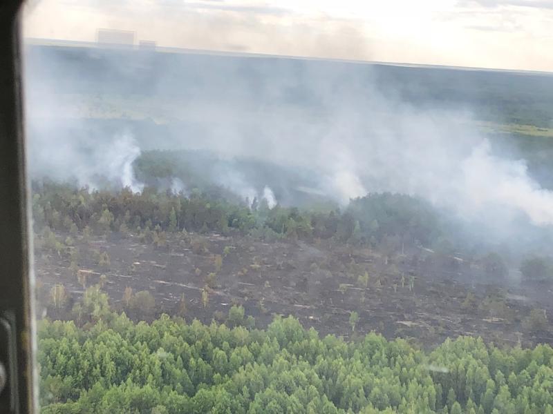 Чернобыльский лес горит