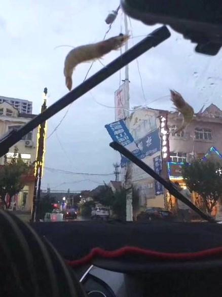 дождь креветки