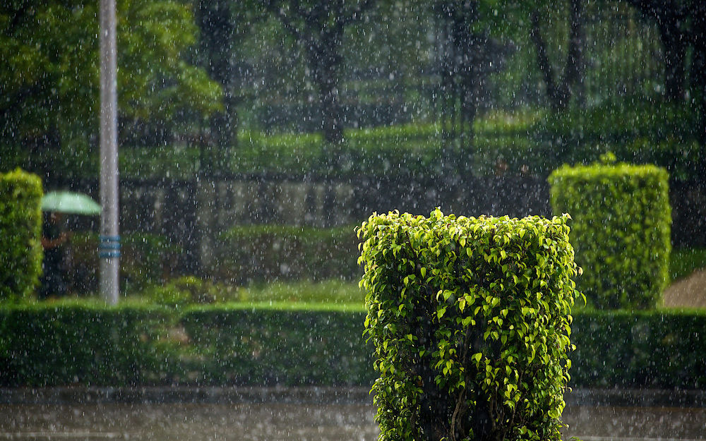 дождь летом