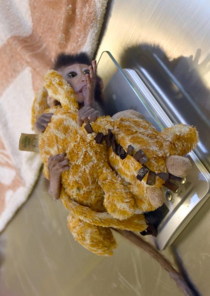 обезьянка Таиланд