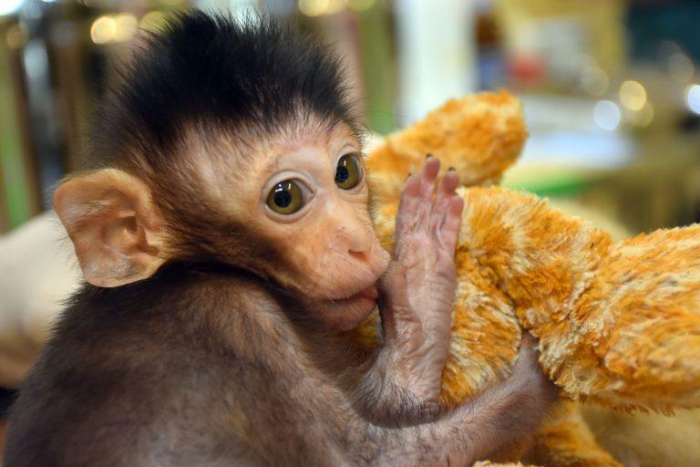 Таиланд обезьянка