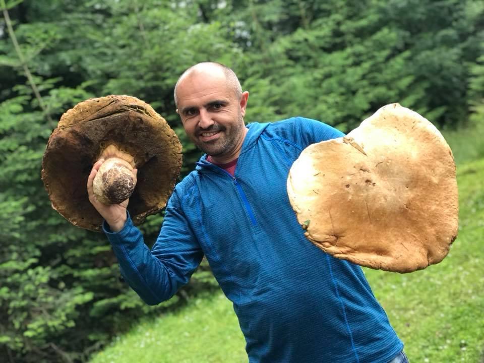 самые большие грибы фотографии переживала дорогу, как