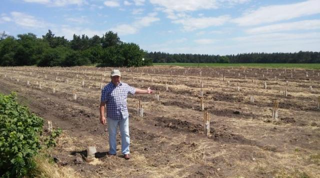 плантация киви