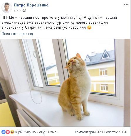 кот скрин