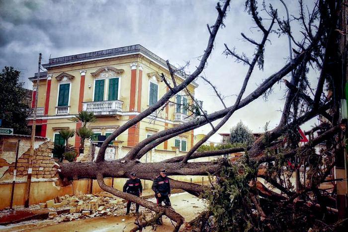 падение деревьев