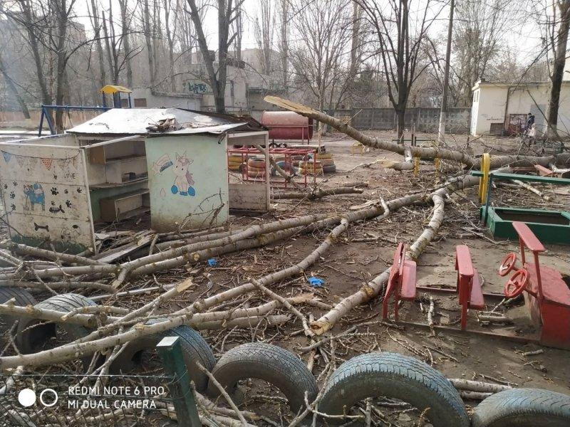 дерево в Одессе