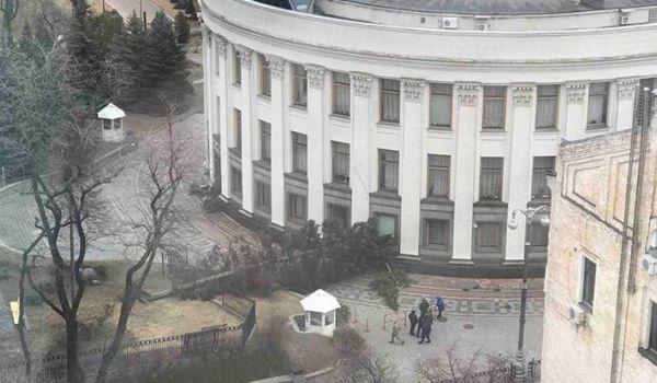 падение ели в Киеве