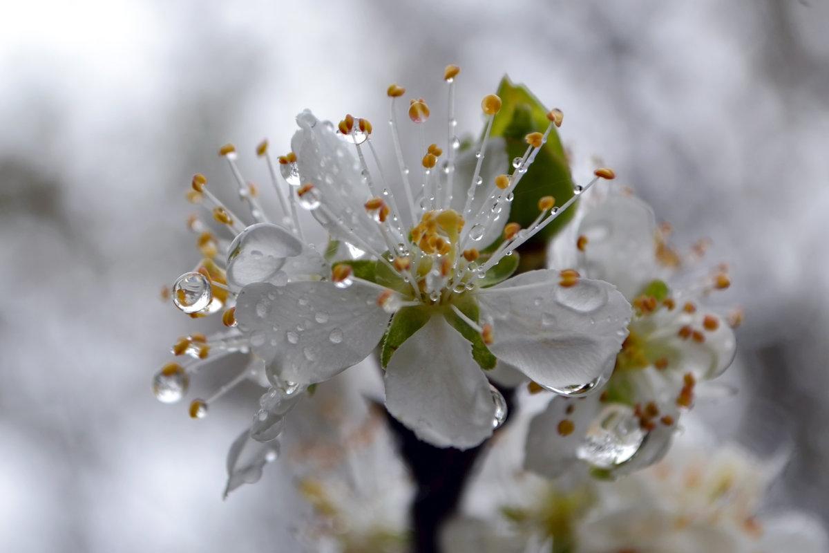 дождливая весна