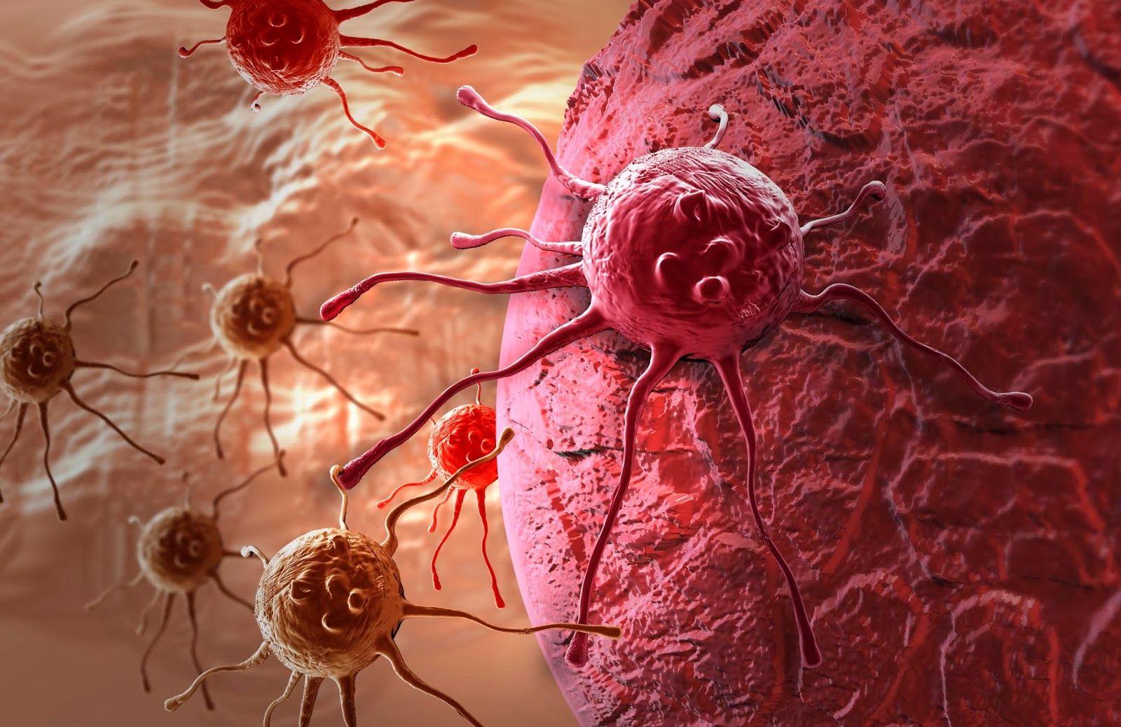 Учёные говорят, что стали ближе к универсальной противораковой терапии