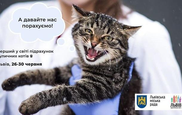 коты Львова