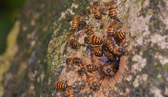 пчела2