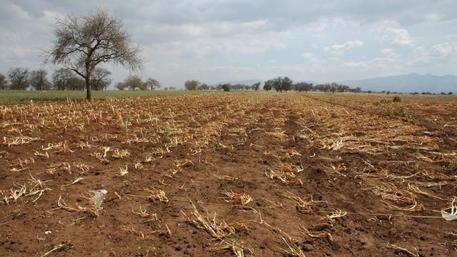 Синоптики предупредили украинских аграриев о майской засухе